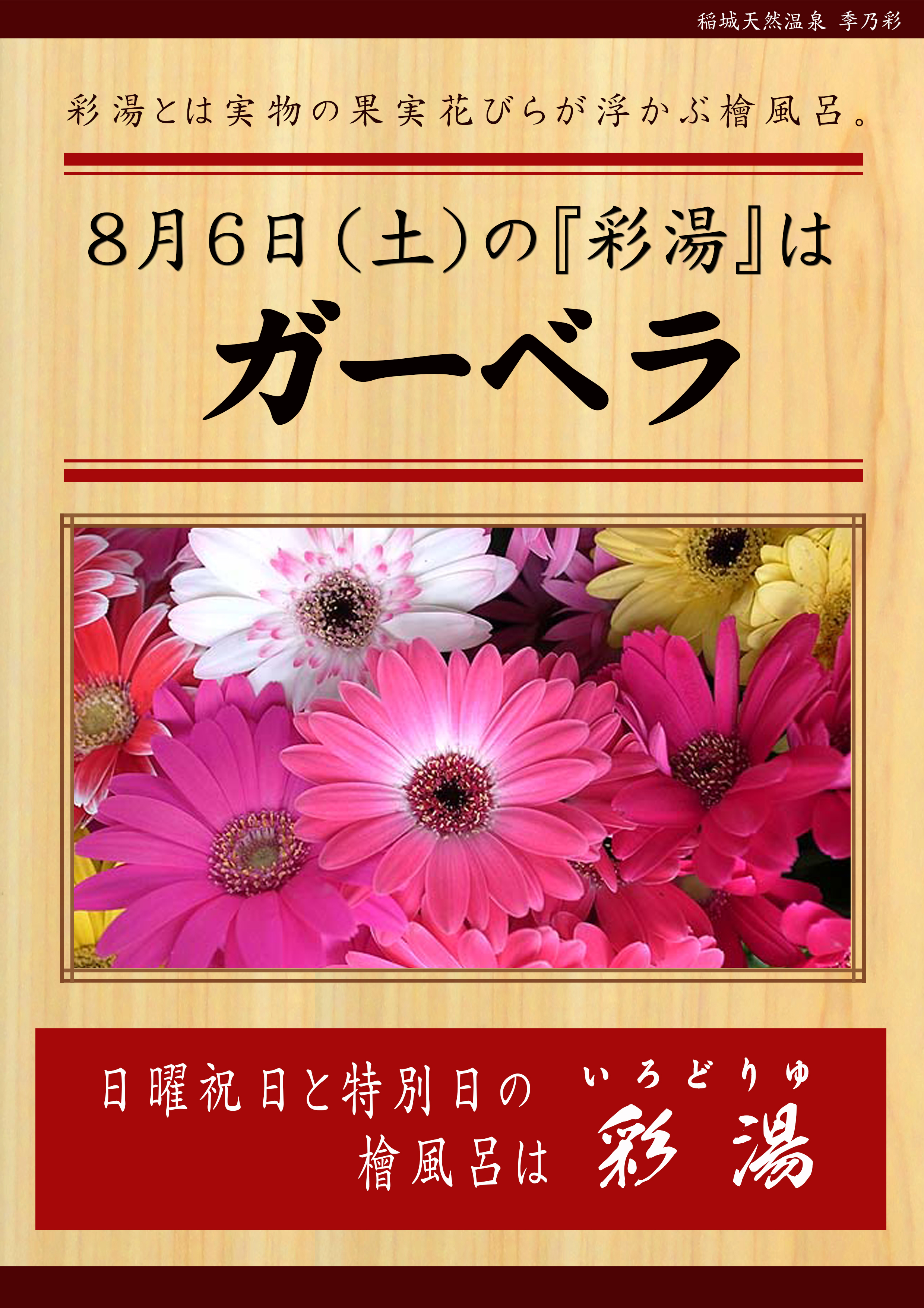 20160806 彩湯 ガーベラ