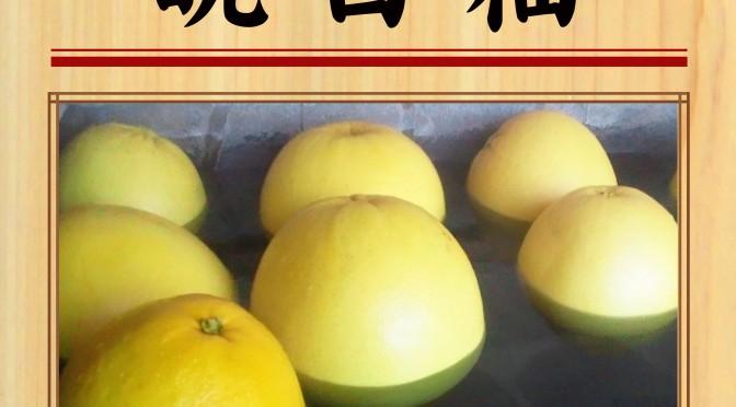 1月4日(木) 晩白柚(ばんぺいゆ)