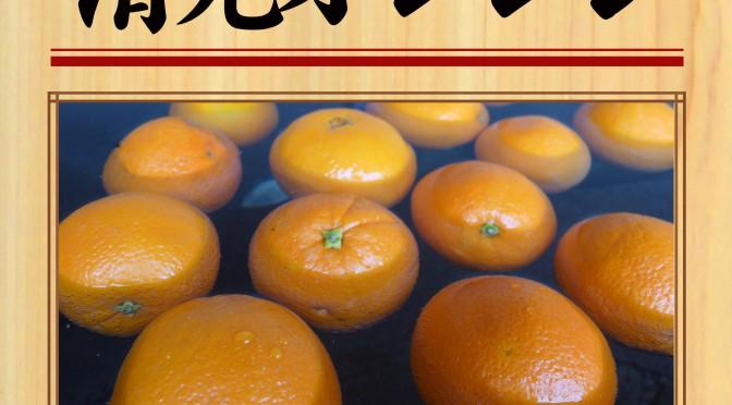 4月22日(日) 清見オレンジ
