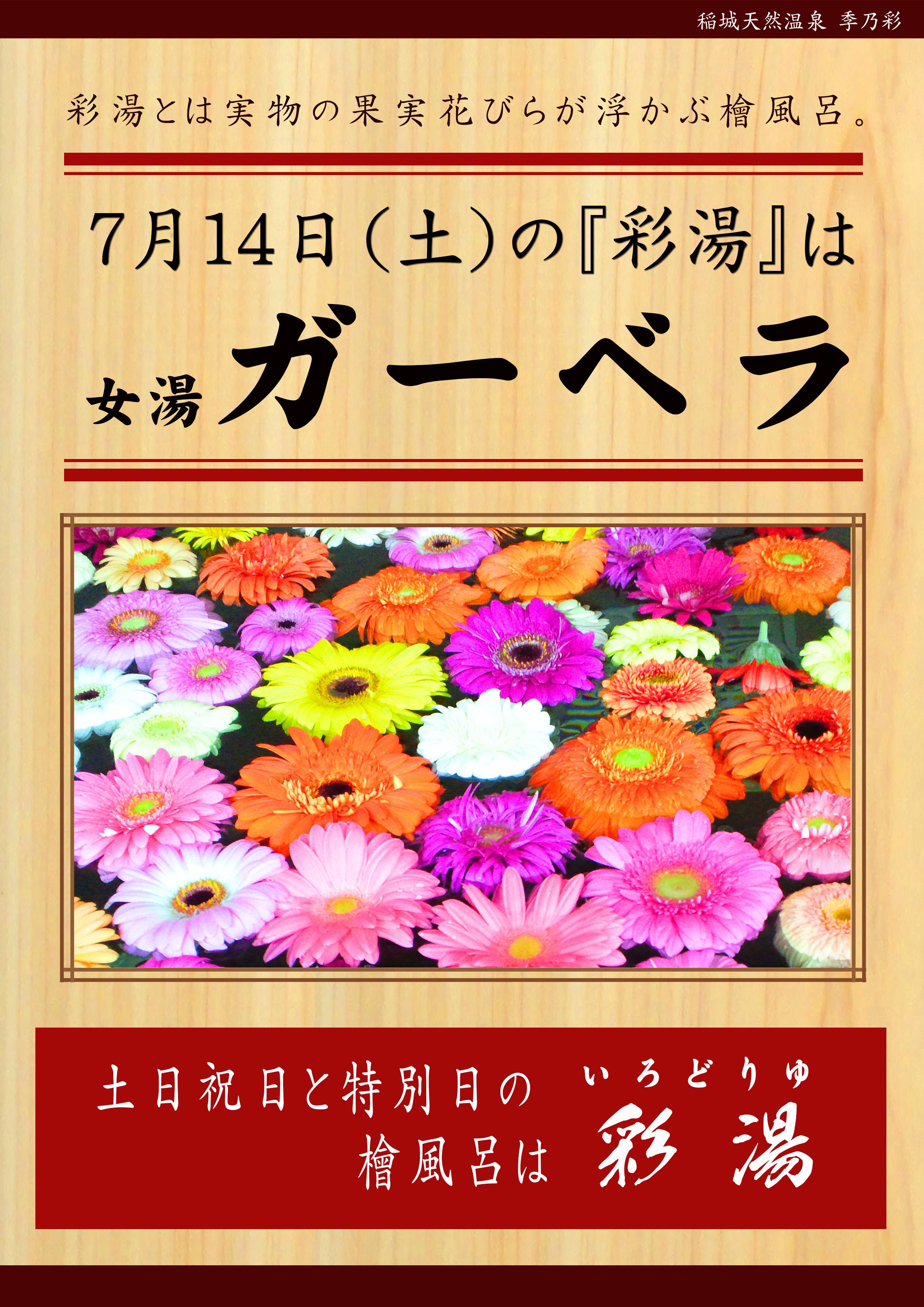 20180714POP イベント 彩湯 ガーベラ