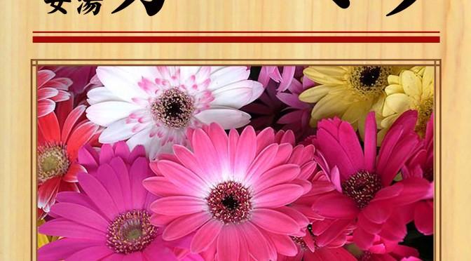 12月1日(土) 女湯 ガーベラ