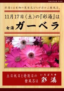 20181117POP イベント 彩湯 女湯 ガーベラ