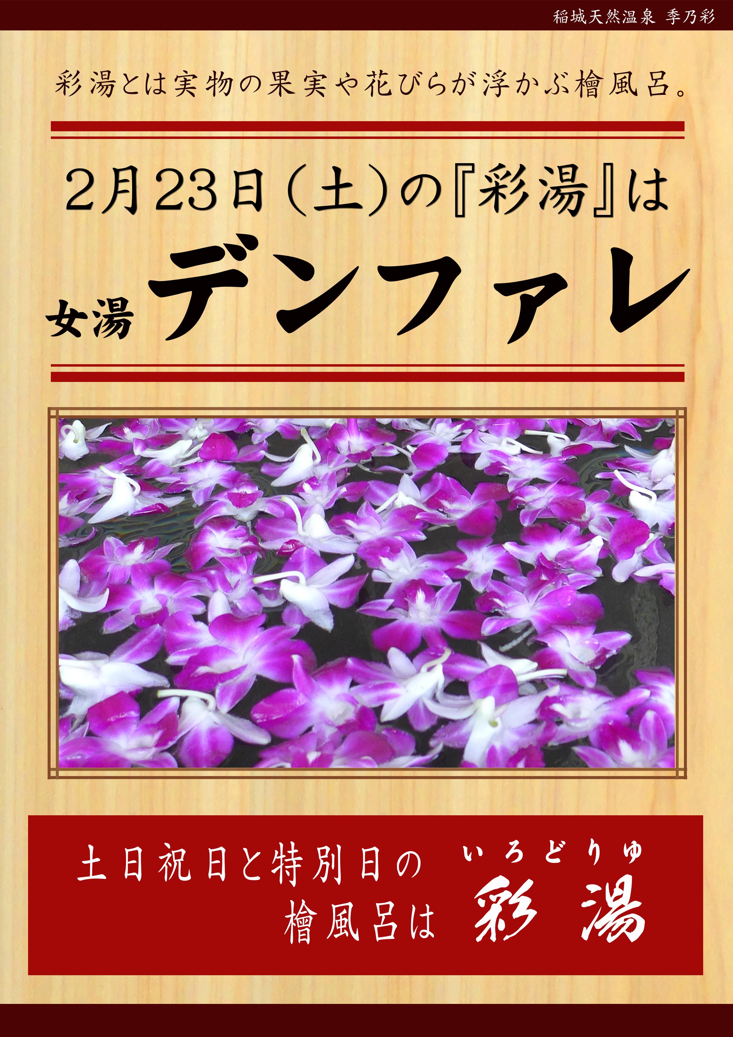 20190223 POP イベント 彩湯 女湯 デンファレ