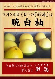 20190324POP イベント 彩湯 晩白柚