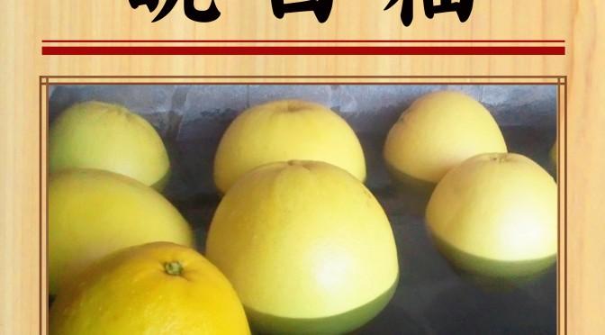 200202 POP イベント 彩湯 晩白柚