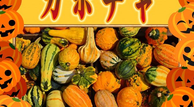10月31日(日)檜風呂 かぼちゃ